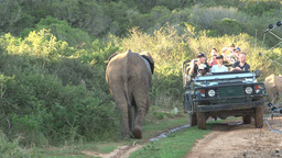 Tourists In 4WD Car, Elephant Passing Safari stock footage