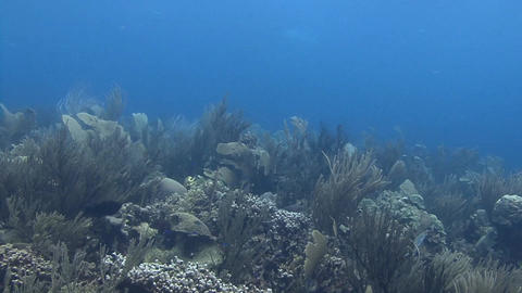 Reef in Bonaire Stock Video Footage