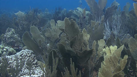 Reef in Bonaire Footage