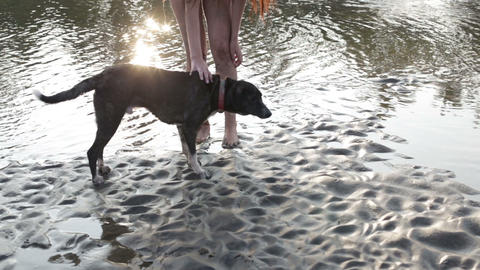prehistoric man playing with a dog on the beach Stock Video Footage