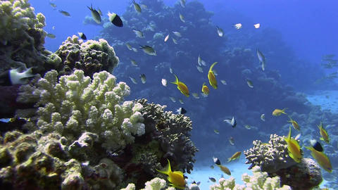 Reef with fishes Stock Video Footage