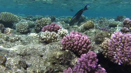 Reef top, coral Stock Video Footage
