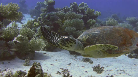 Turtle swimming in sea Stock Video Footage