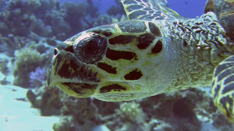 Turtle close-up Stock Video Footage