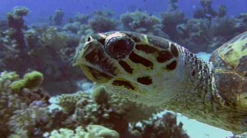 Turtle close-up Footage