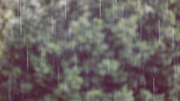 Rain In The Forest stock footage