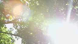 Tree Close Up With Lens Flare Footage