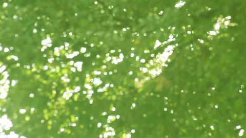 green leaves defocused Footage
