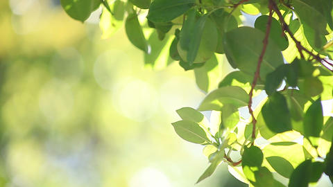 Green Leaves On A Sunny Day stock footage