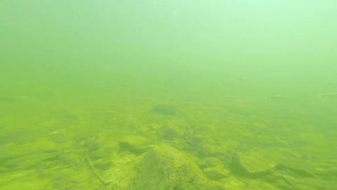Underwater View 1