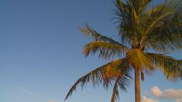 HD2009-4-9-5 palm tree Stock Video Footage