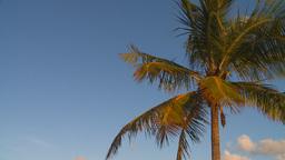 HD2009-4-9-5 palm tree Footage