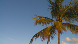 HD2009-4-9-5 palm tree Stock Video Footage