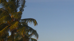HD2009-4-9-7 palm tree Footage