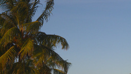 HD2009-4-9-7 palm tree Stock Video Footage