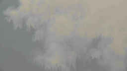 HD2009-8-1b-19 forest fire from across lake TL Footage