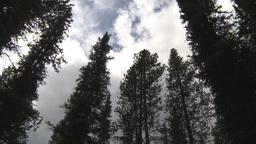 HD2009-8-6-1 trees and clouds high angle Stock Video Footage