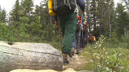 HD2009-8-6-3 hikers in forest Stock Video Footage