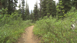 HD2009-8-7-1 walking through forest Stock Video Footage