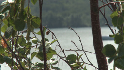 HD2009-8-22RC-4 fast boat on lake idles by rack focus trees Stock Video Footage