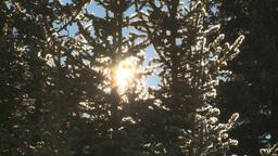 HD2009-1-7-21 snow tree sun Stock Video Footage