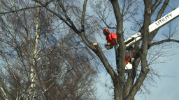HD2009-1-9-19 arborist chainsaw bucket lift cut Footage