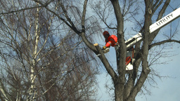 HD2009-1-9-19 arborist chainsaw bucket lift cut Stock Video Footage