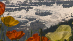 HD2009-7-9-4 Lake Louise poppies z Stock Video Footage