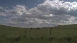 HD2009-7-10-9RC horses and clouds Stock Video Footage
