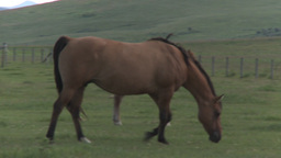 HD2009-7-10-19RC horse and colts Stock Video Footage