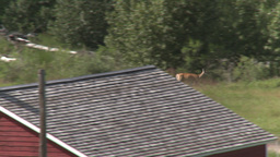 HD2009-7-10-21RC deer and young Stock Video Footage