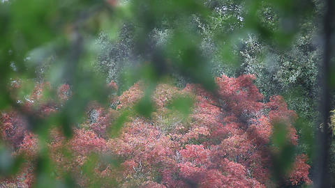 autumn leaves in the rain Footage