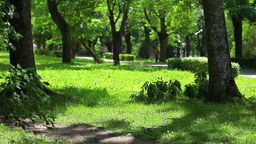 Old Shaded Park Summer Day stock footage