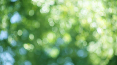 Green Nature Background stock footage