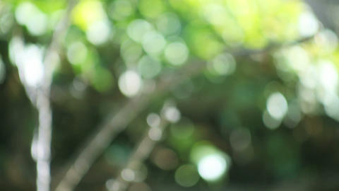 defocused tree background Footage