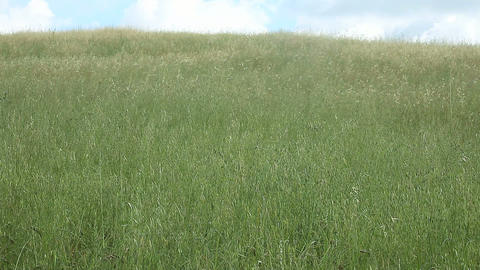 Field Of Grass stock footage