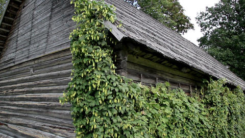 Old cedar wooden shake shingle roof of the hop Hum Footage