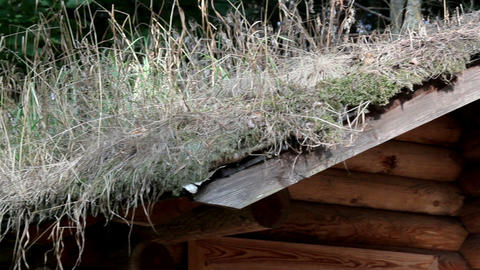Grasses growing on the roof of the cabin log ライブ動画