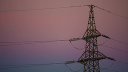 Electrical Tower With A Lot Of Birds At Dawn stock footage