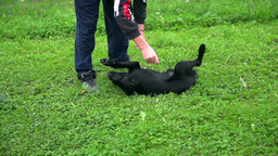 Boy Petting Small Puppy On Grass In Slow Motion stock footage