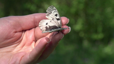 Butterfly Sitting On A Hand stock footage