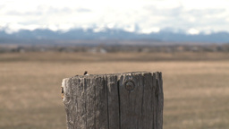 HD2009-6-11-11RC 60i fence post mtns rack focus Stock Video Footage