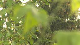 HD2009-6-17-14 rain leaves Stock Video Footage
