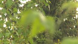 HD2009-6-17-14 rain leaves Footage