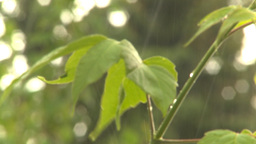 HD2009-6-17-14 rain leaves Stock Video Footage