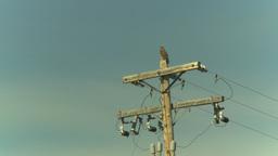 HD2009-6-19-16 hawk on powerpole Stock Video Footage