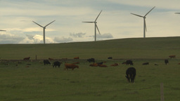 HD2009-6-20-28 cattle and wind turbines on ridge Stock Video Footage