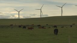 HD2009-6-20-28 cattle and wind turbines on ridge Stock Video Footage