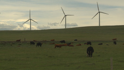 HD2009-6-20-28 cattle and wind turbines on ridge Footage