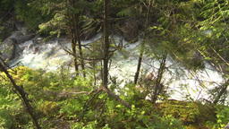 HD2009-6-22-43 wild river and forest Stock Video Footage